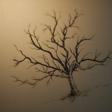 Gravure taille-douce d'un arbre